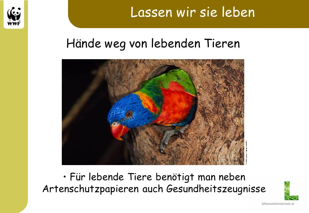 Lassen wir sie leben Für lebende Tiere benötigt man neben Artenschutzpapieren auch Gesundheitszeugnisse © WWF-Canon / Martin HARVEY Hände weg von lebe