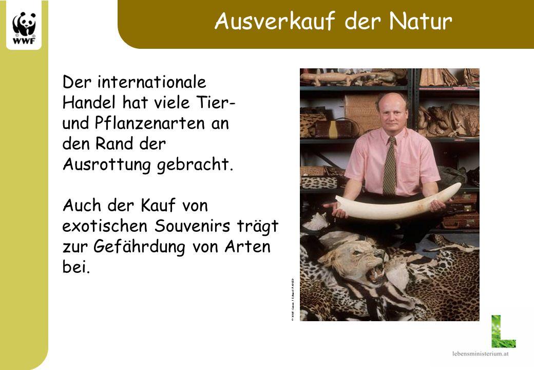 Schauen statt Kaufen Obwohl einige Produkte aus bedrohten Arten legal erworben werden dürfen, sollte man generell auf Souvenirs die aus Tier- und Pflanzenarten hergestellt sind verzichten.