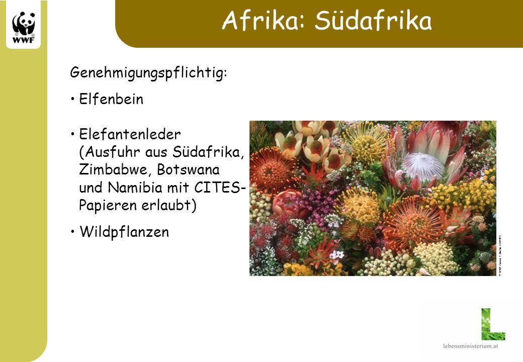 Afrika: Südafrika Genehmigungspflichtig: Elfenbein Elefantenleder (Ausfuhr aus Südafrika, Zimbabwe, Botswana und Namibia mit CITES- Papieren erlaubt)