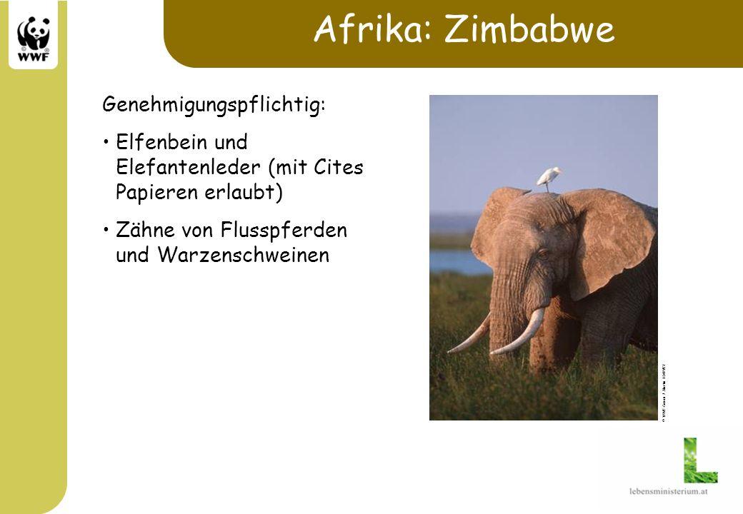 Afrika: Zimbabwe Genehmigungspflichtig: Elfenbein und Elefantenleder (mit Cites Papieren erlaubt) Zähne von Flusspferden und Warzenschweinen © WWF-Can