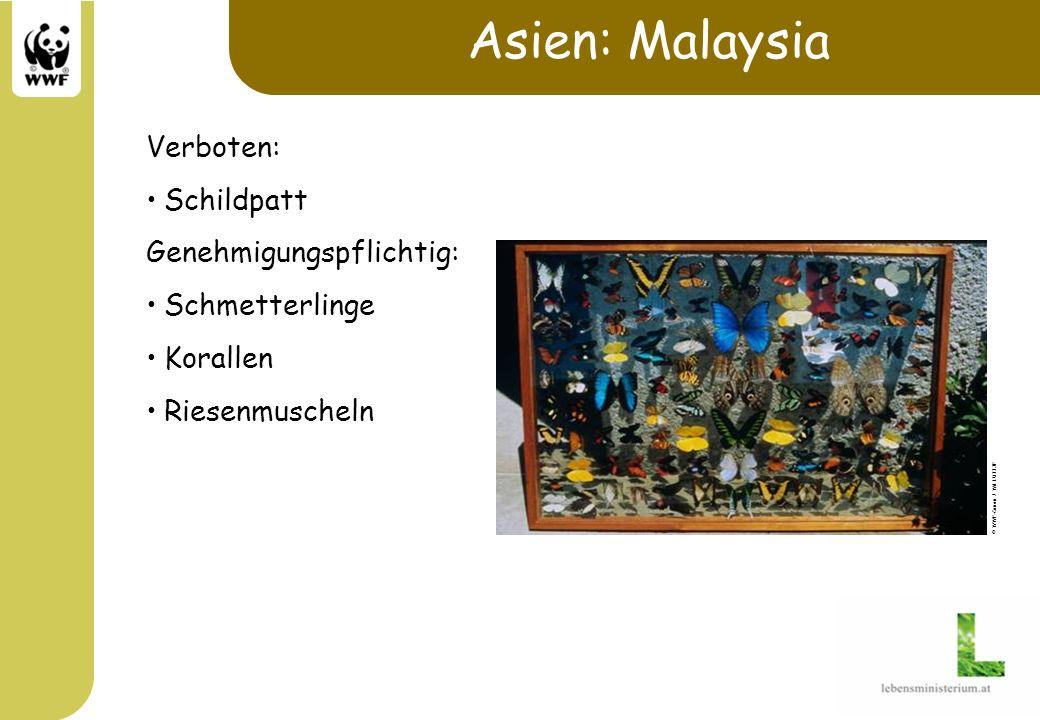 Asien: Malaysia Verboten: Schildpatt Genehmigungspflichtig: Schmetterlinge Korallen Riesenmuscheln © WWF-Canon / Wil LUIIJF
