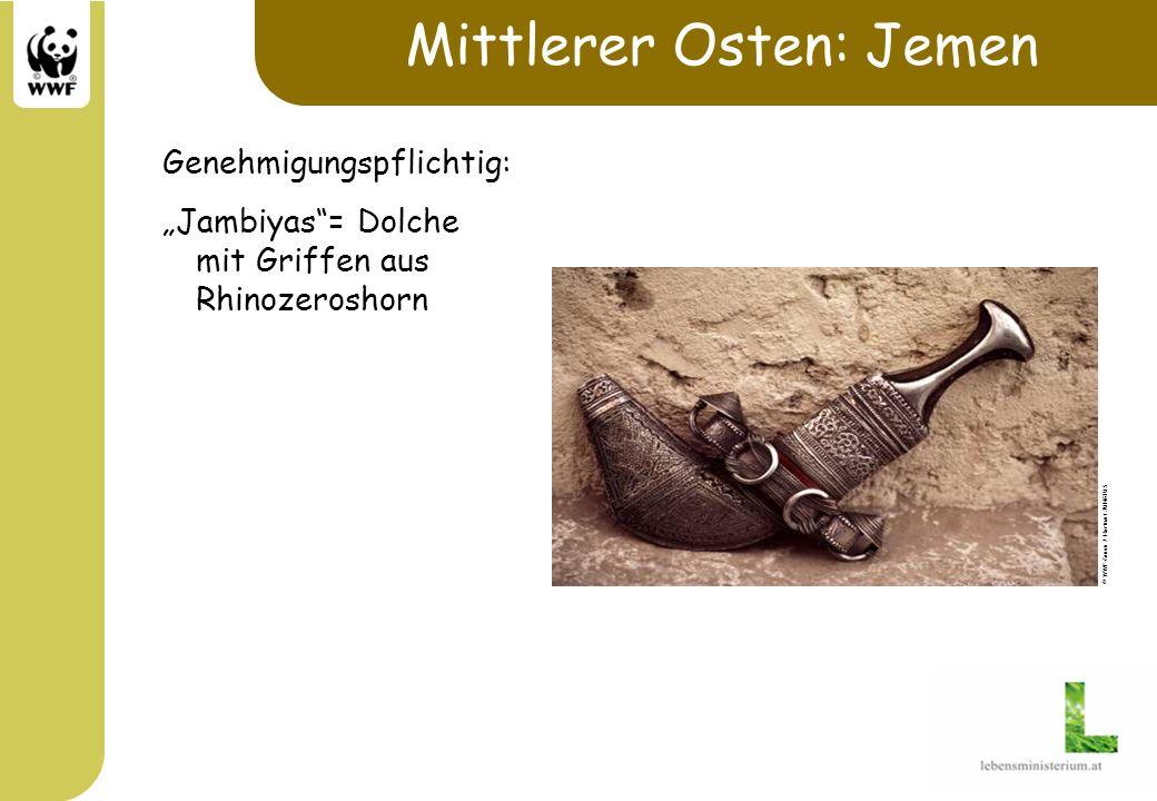 Mittlerer Osten: Jemen Genehmigungspflichtig: Jambiyas= Dolche mit Griffen aus Rhinozeroshorn © WWF-Canon / Hartmut JUNGIUS