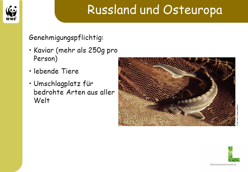Russland und Osteuropa Genehmigungspflichtig: Kaviar (mehr als 250g pro Person) lebende Tiere Umschlagplatz für bedrohte Arten aus aller Welt © WWF-Ca