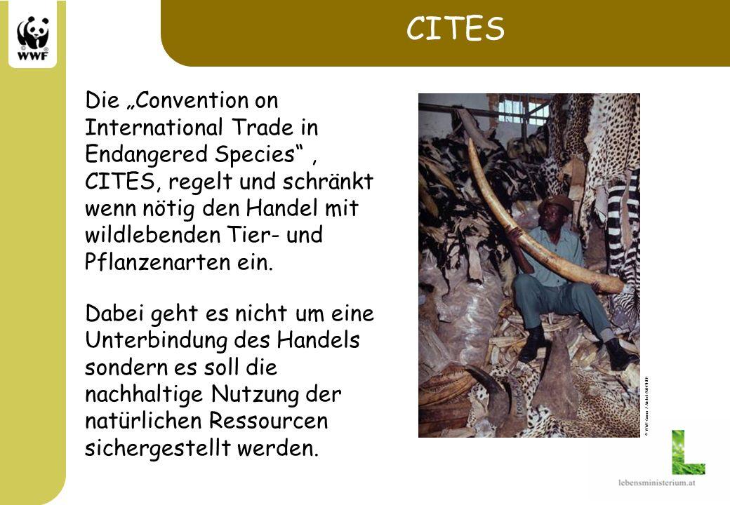 CITES Anhang I umfasst vom Aussterben bedrohte Arten, der kommerzielle Handel ist verboten.