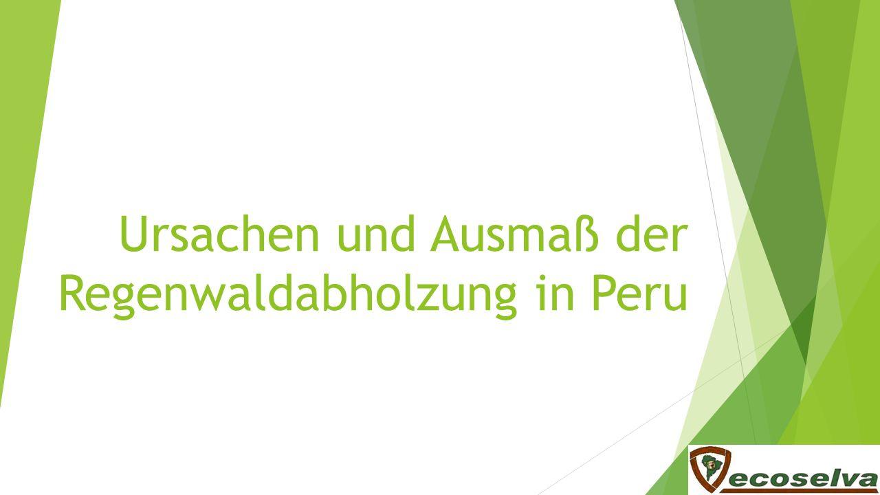 Ursachen Verfügbares Land Brandrodung Kleinbauern: Koka / extensive Landwirtschaft Großkonzerne: Soja, Plantagen (z.B.
