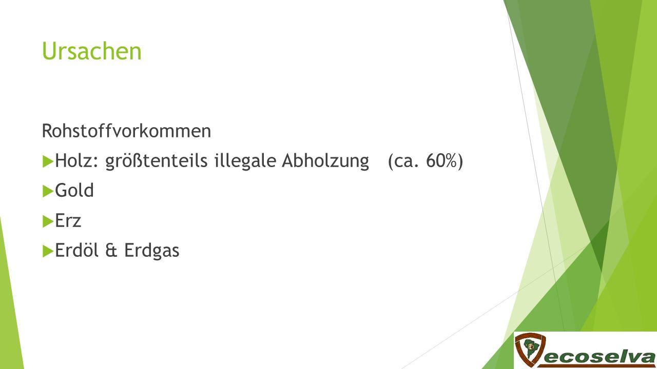 Ursachen Rohstoffvorkommen Holz: größtenteils illegale Abholzung (ca. 60%) Gold Erz Erdöl & Erdgas