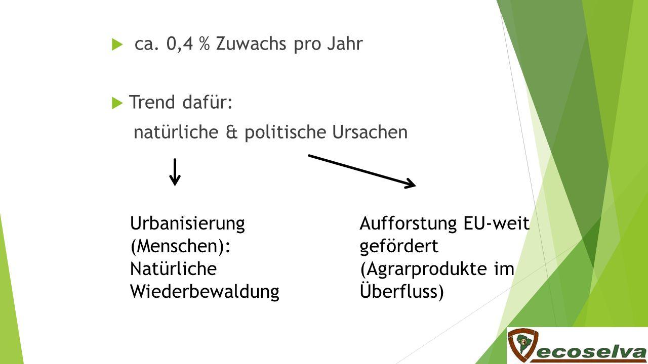 ca. 0,4 % Zuwachs pro Jahr Trend dafür: natürliche & politische Ursachen Urbanisierung (Menschen): Natürliche Wiederbewaldung Aufforstung EU-weit gefö