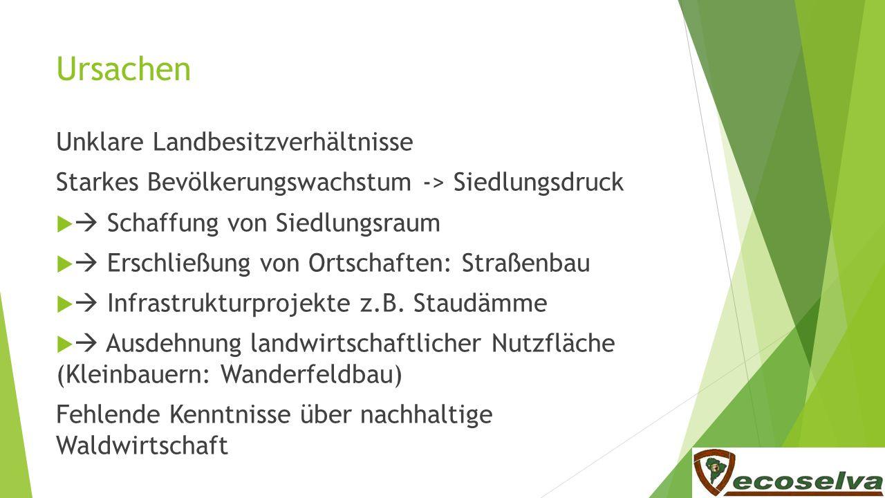 Regenwaldschutz Weniger Fleisch bewusster Fleischkonsum ca.