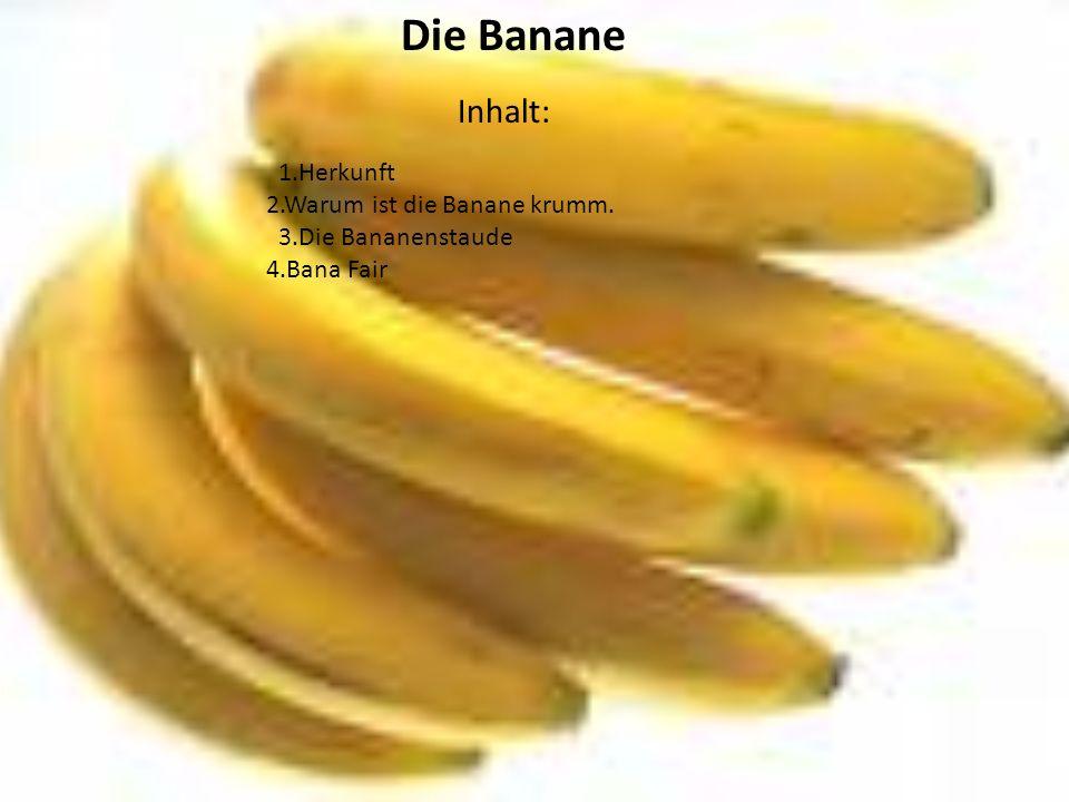 Die Banane Inhalt: 1.Herkunft 2.Warum ist die Banane krumm. 3.Die Bananenstaude 4.Bana Fair
