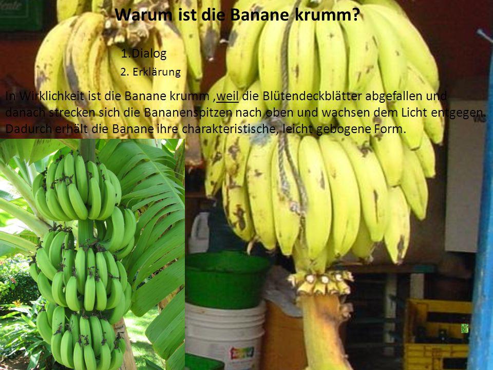Herkunft Ursprünglich kam die Banane aus den Tropenregionen Südostasiens. Die Seefahrer brachten die Banane in die ganze Welt. Da sie in vielen Region