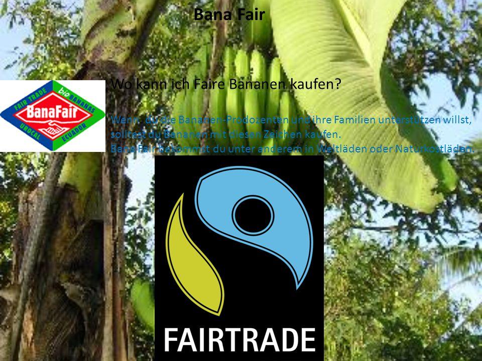 Die Bananen Staude Die Bananenpflanze stammt aus den Tropen, wo es warm und feucht ist. Am liebsten mag sie Temperaturn von 26-27°C und viel Regen.Die