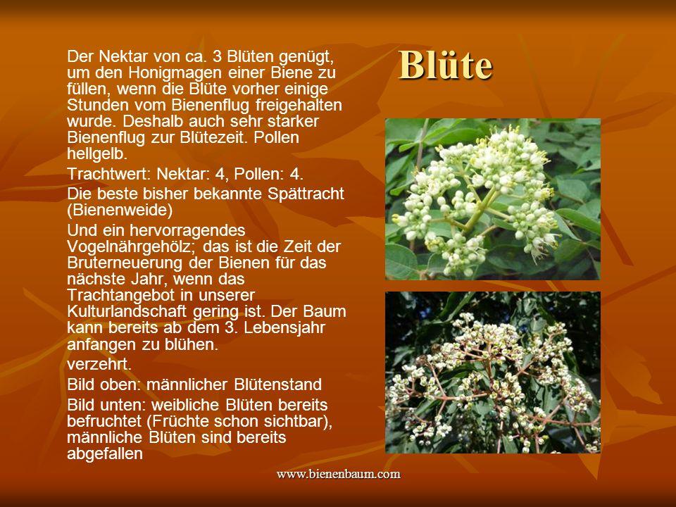 www.bienenbaum.com Blüte Der Nektar von ca.
