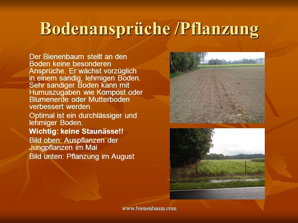 www.bienenbaum.com Bodenansprüche /Pflanzung Der Bienenbaum stellt an den Boden keine besonderen Ansprüche.