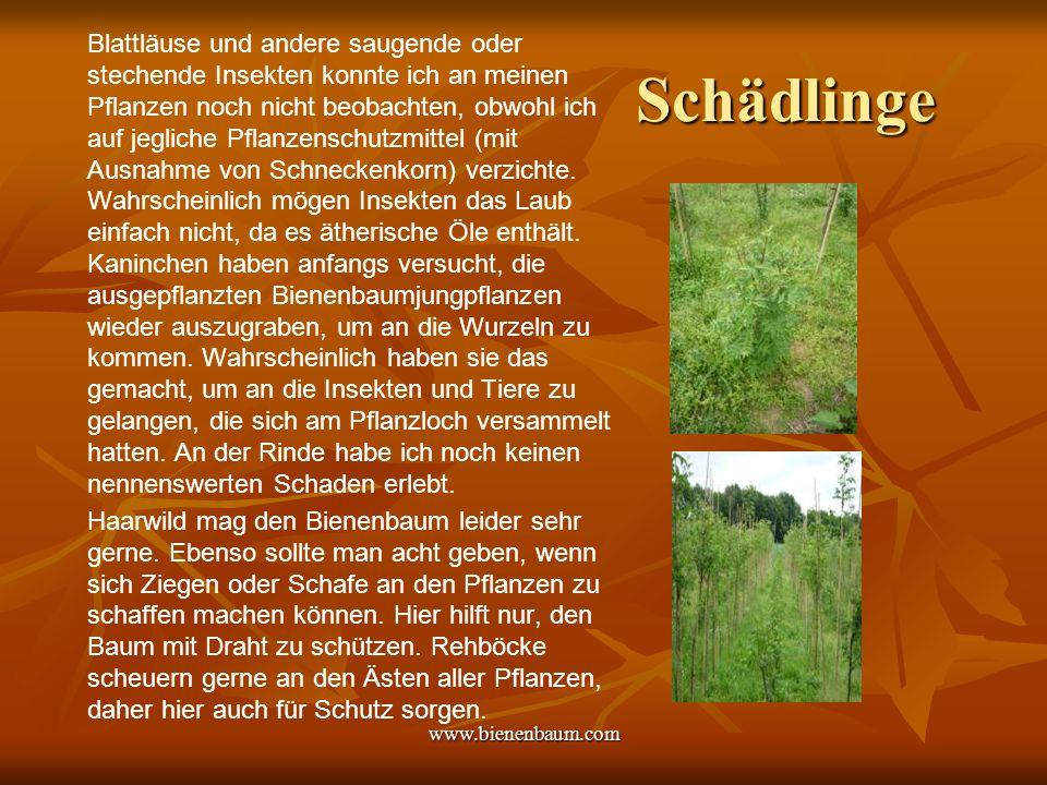 www.bienenbaum.com Schädlinge Blattläuse und andere saugende oder stechende Insekten konnte ich an meinen Pflanzen noch nicht beobachten, obwohl ich auf jegliche Pflanzenschutzmittel (mit Ausnahme von Schneckenkorn) verzichte.