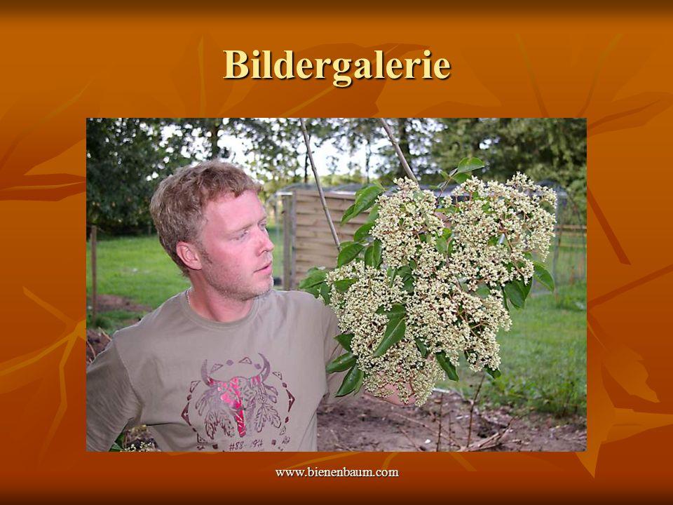www.bienenbaum.com Bildergalerie