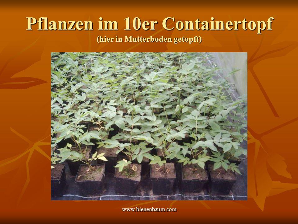Pflanzen im 10er Containertopf (hier in Mutterboden getopft)