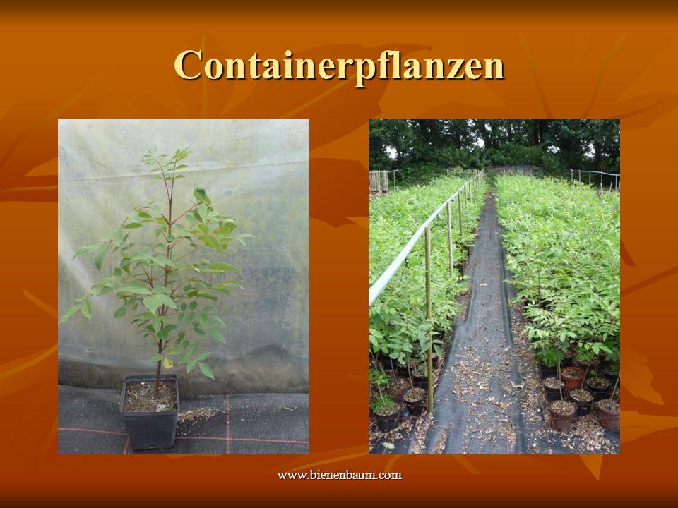 www.bienenbaum.com Containerpflanzen