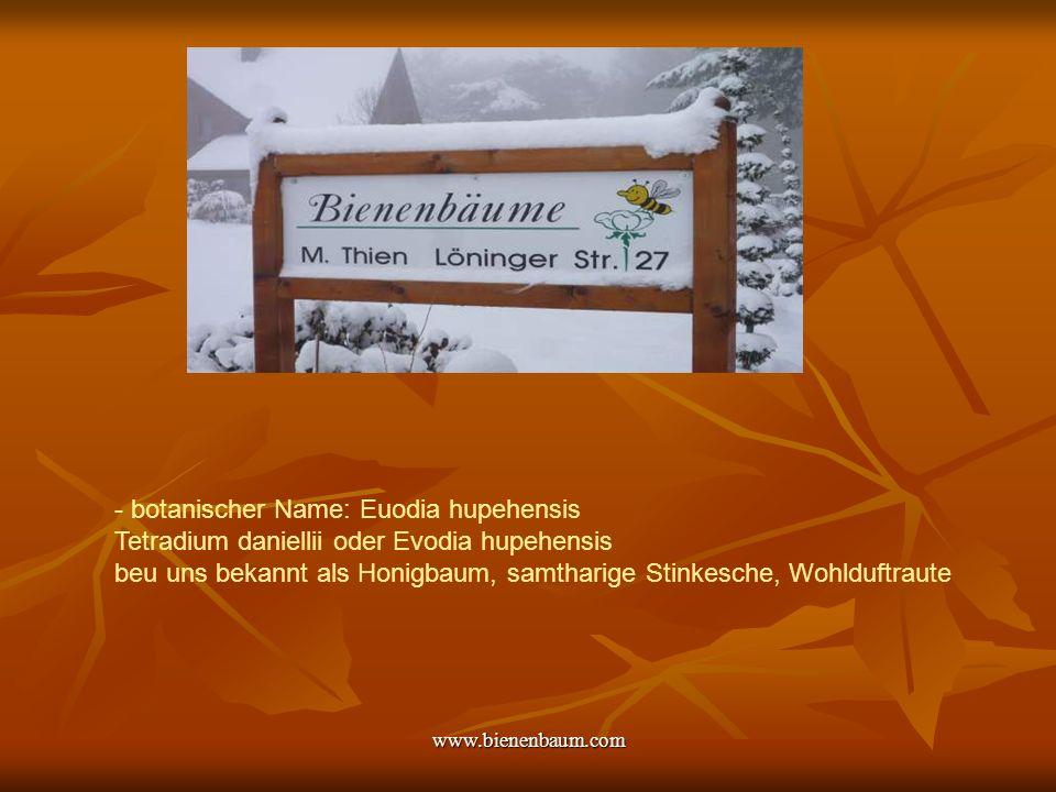 www.bienenbaum.com Der Bienenbaum Das Wertvolle am Bienenbaum: Er blüht, wenn es in der Natur für die Insekten kaum noch Trachten gibt.