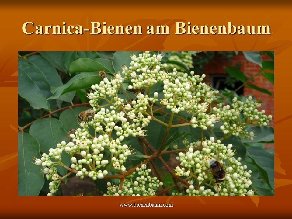 www.bienenbaum.com Carnica-Bienen am Bienenbaum