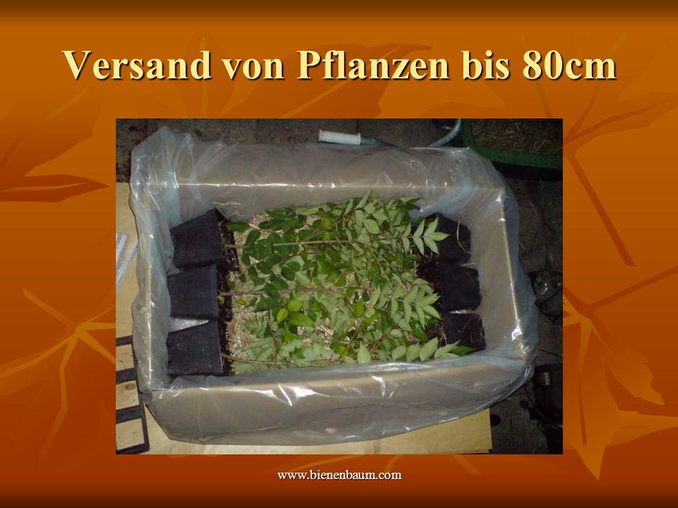 Versand von Pflanzen bis 80cm
