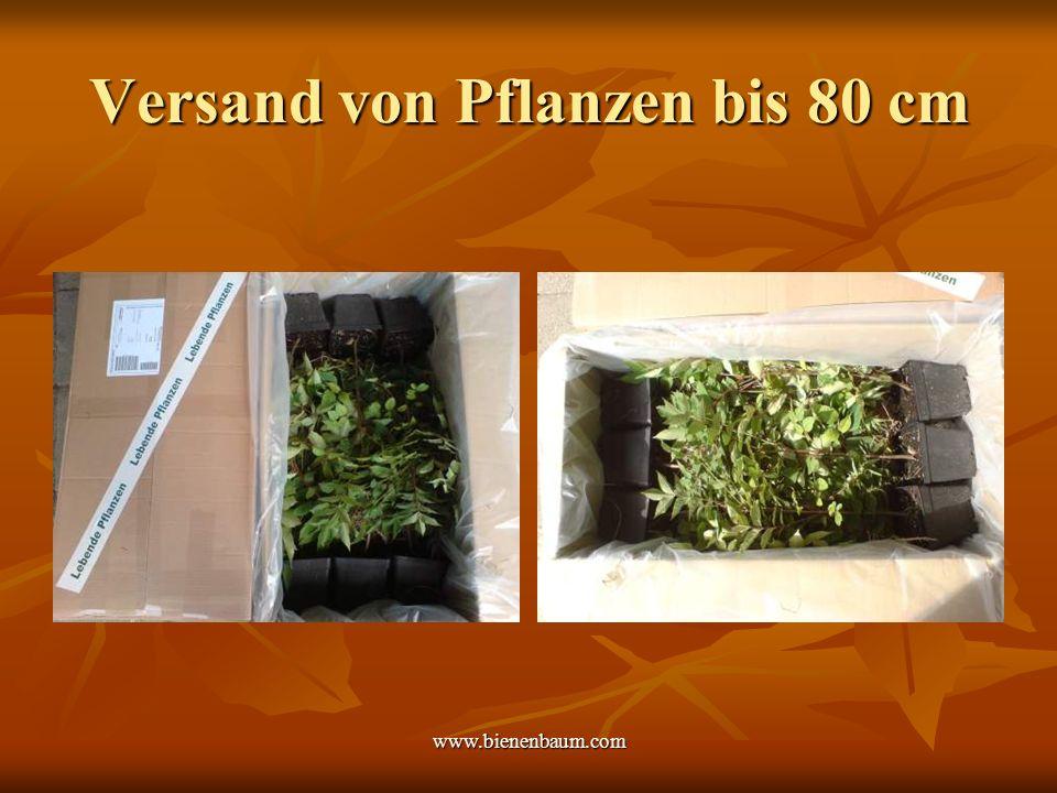 www.bienenbaum.com Versand von Pflanzen bis 80 cm