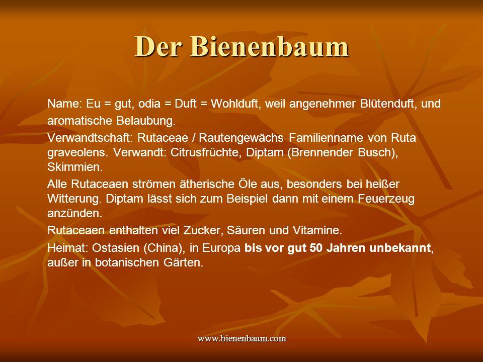 www.bienenbaum.com Bienenbäume im Freiland, 3 Jahre alt