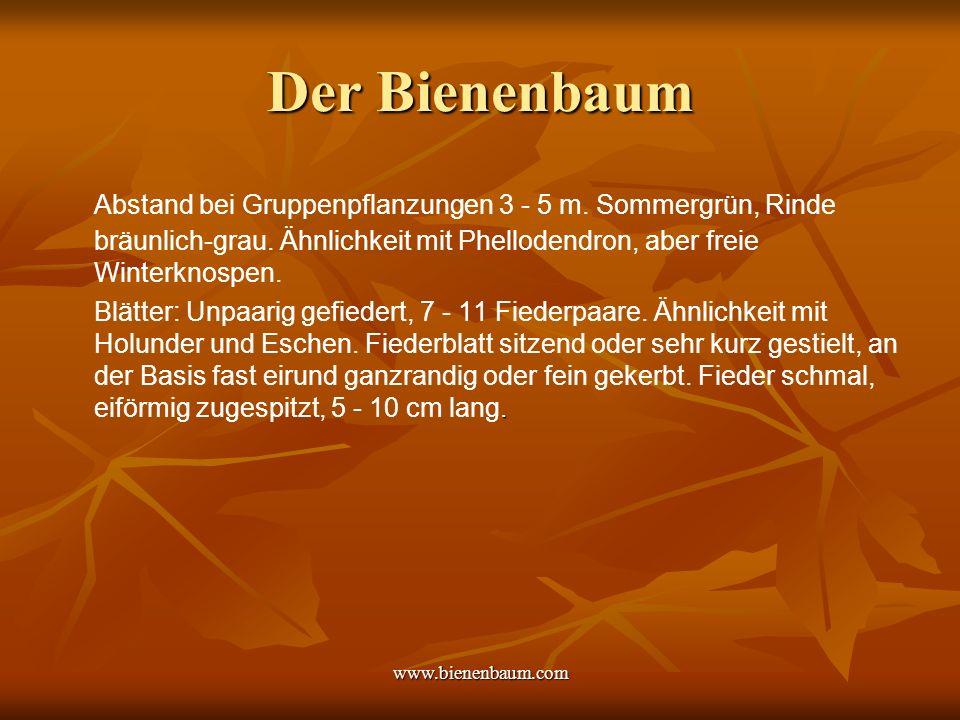 www.bienenbaum.com Der Bienenbaum Abstand bei Gruppenpflanzungen 3 - 5 m.