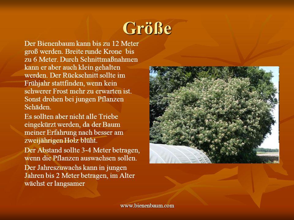 www.bienenbaum.com Winterhärte Leider ist der Bienenbaum erst nach 3 überstandenen Wintern als absolut winterhart zu bezeichnen.