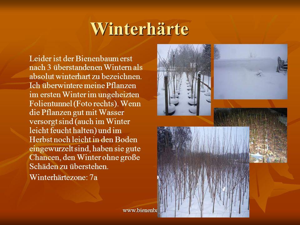www.bienenbaum.com Winterhärte Sehr gut lassen sich die Pflanzen auch in der Garage, im Carport oder im frostfrei gehaltenen Wintergarten überwintern.
