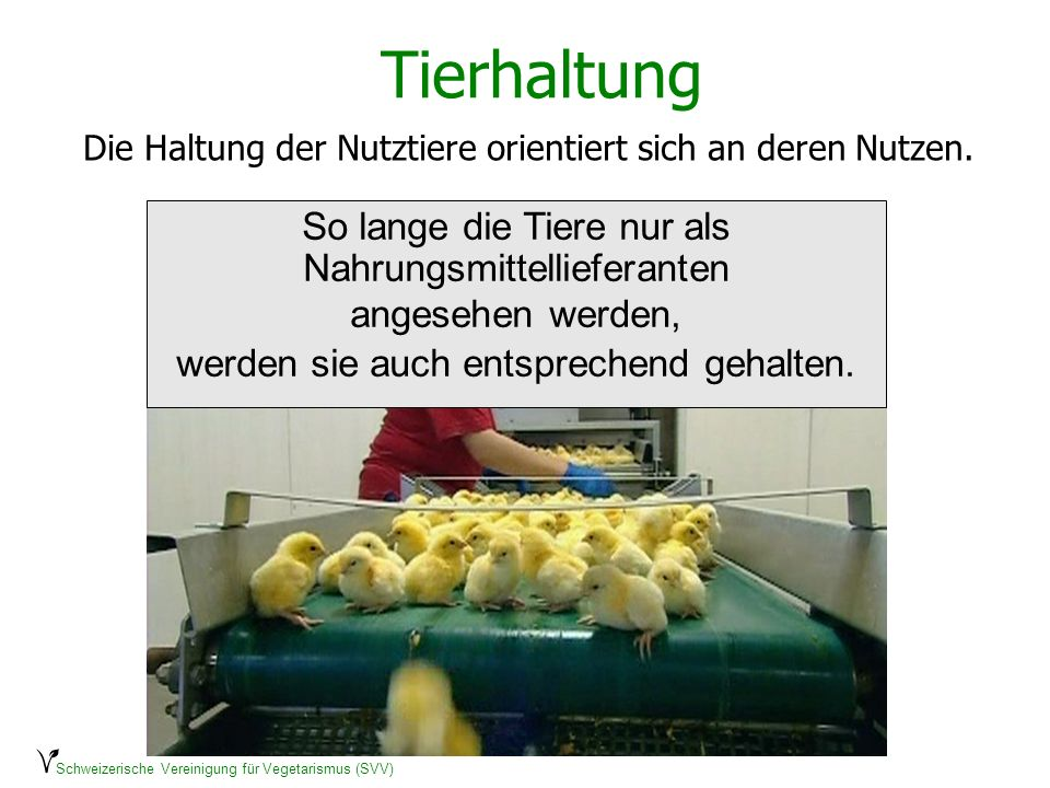 Schweizerische Vereinigung für Vegetarismus (SVV) Tierhaltung Die Haltung der Nutztiere orientiert sich an deren Nutzen. So lange die Tiere nur als Na