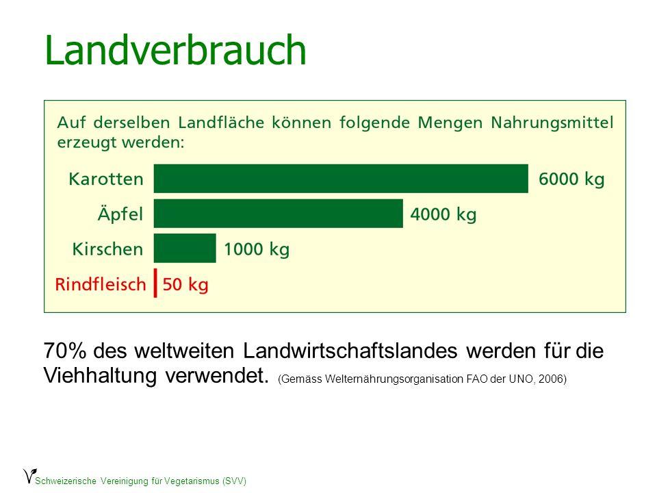 Schweizerische Vereinigung für Vegetarismus (SVV) Landverbrauch 70% des weltweiten Landwirtschaftslandes werden für die Viehhaltung verwendet. (Gemäss
