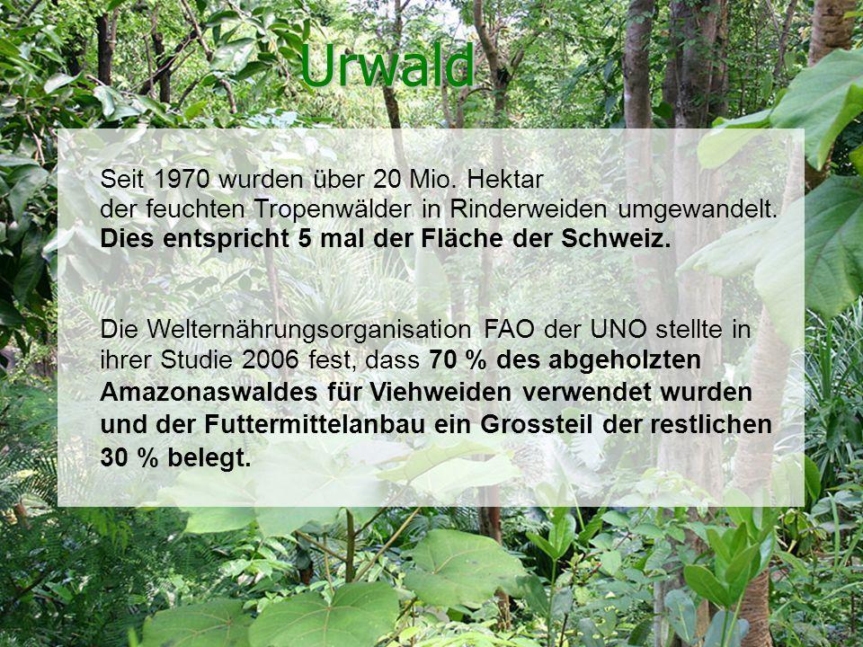 Schweizerische Vereinigung für Vegetarismus (SVV) Urwald Seit 1970 wurden über 20 Mio. Hektar der feuchten Tropenwälder in Rinderweiden umgewandelt. D