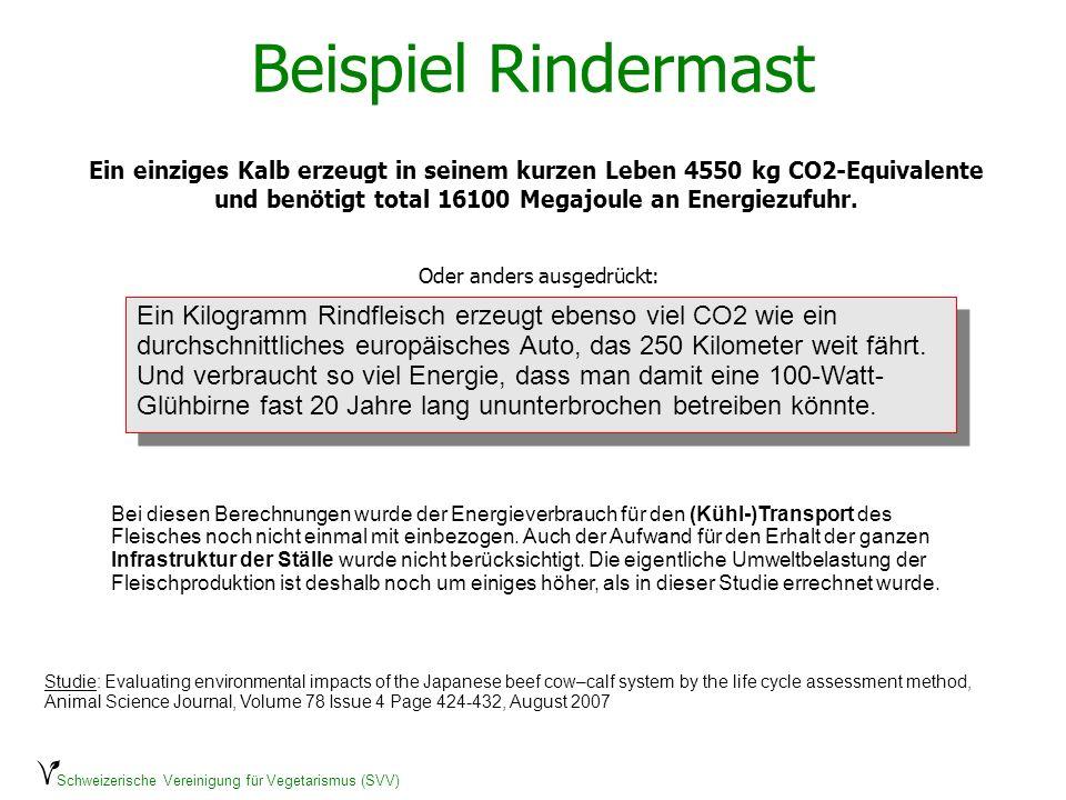 Schweizerische Vereinigung für Vegetarismus (SVV) Beispiel Rindermast Ein einziges Kalb erzeugt in seinem kurzen Leben 4550 kg CO2-Equivalente und ben
