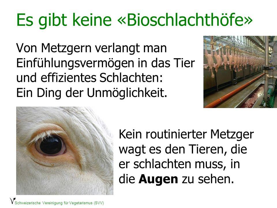 Schweizerische Vereinigung für Vegetarismus (SVV) Es gibt keine «Bioschlachthöfe» Von Metzgern verlangt man Einfühlungsvermögen in das Tier und effizi