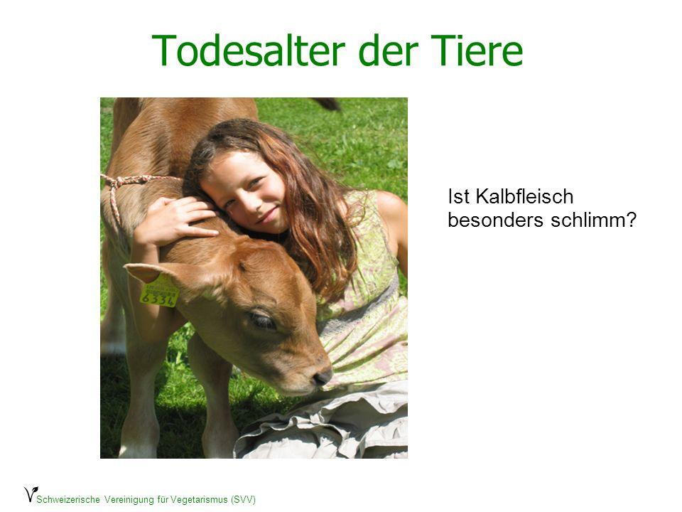 Schweizerische Vereinigung für Vegetarismus (SVV) Todesalter der Tiere Ob Kalb oder Huhn: Geschlachtet wird, bevor das Leben richtig begonnen hat.