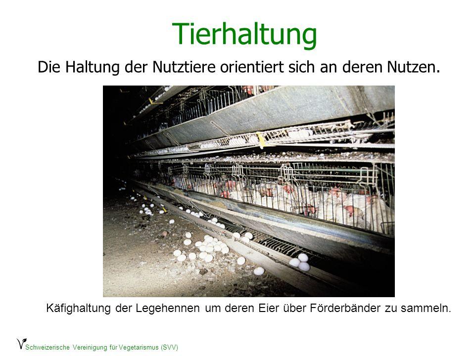 Schweizerische Vereinigung für Vegetarismus (SVV) Tierhaltung Die Haltung der Nutztiere orientiert sich an deren Nutzen. Käfighaltung der Legehennen u