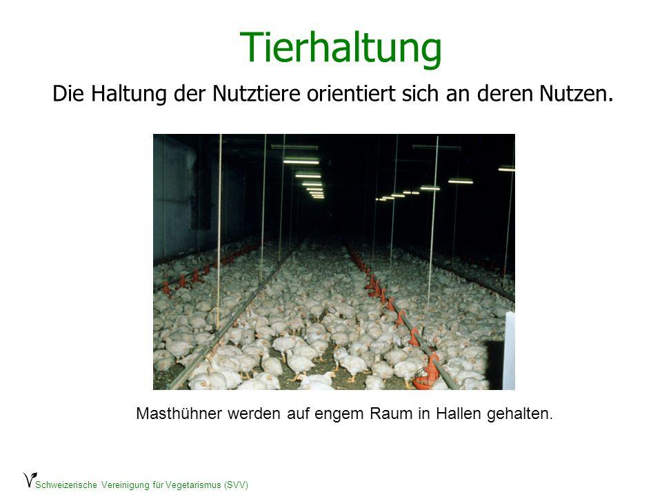 Schweizerische Vereinigung für Vegetarismus (SVV) Tierhaltung Die Haltung der Nutztiere orientiert sich an deren Nutzen. Masthühner werden auf engem R
