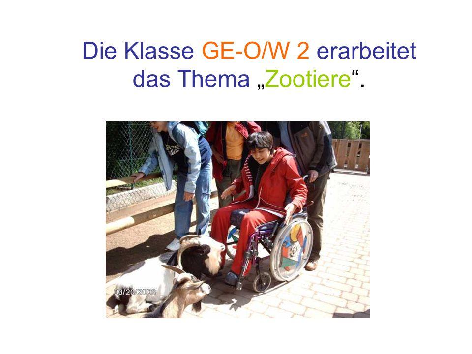 Die Klasse GE-O/W 2 erarbeitet das Thema Zootiere.