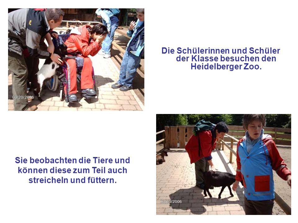 Die Schülerinnen und Schüler der Klasse besuchen den Heidelberger Zoo. Sie beobachten die Tiere und können diese zum Teil auch streicheln und füttern.