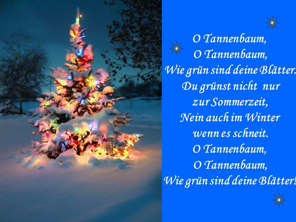 O Tannenbaum, Wie grün sind deine Blätter. Du grünst nicht nur zur Sommerzeit, Nein auch im Winter wenn es schneit. O Tannenbaum, Wie grün sind deine