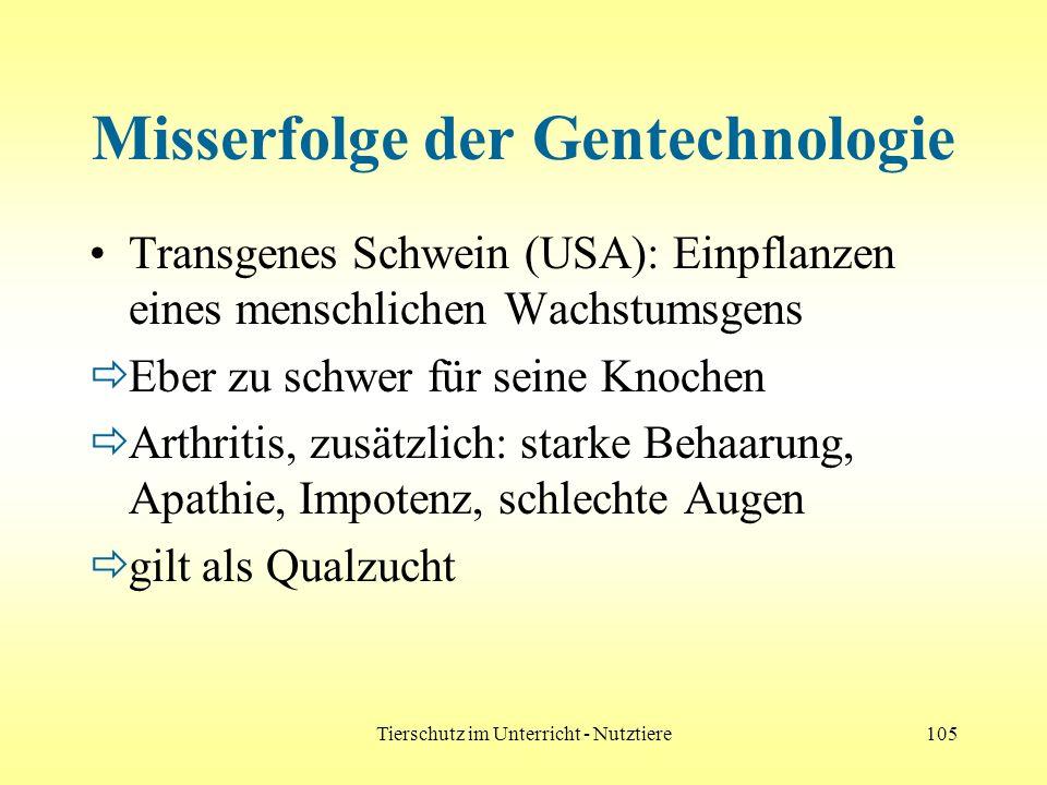 Tierschutz im Unterricht - Nutztiere105 Misserfolge der Gentechnologie Transgenes Schwein (USA): Einpflanzen eines menschlichen Wachstumsgens Eber zu