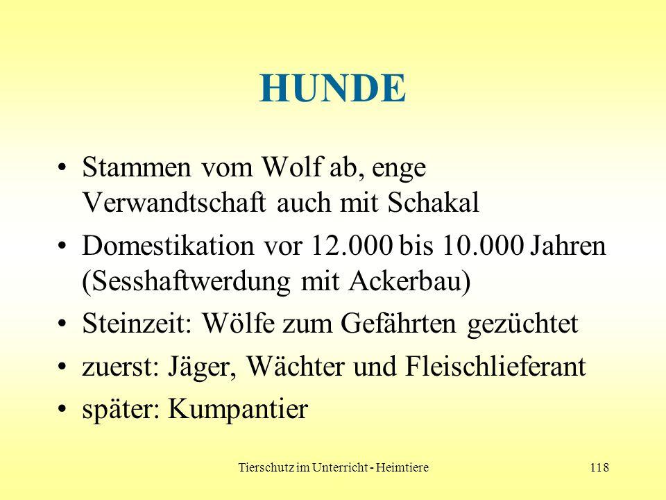 Tierschutz im Unterricht - Heimtiere118 HUNDE Stammen vom Wolf ab, enge Verwandtschaft auch mit Schakal Domestikation vor 12.000 bis 10.000 Jahren (Se