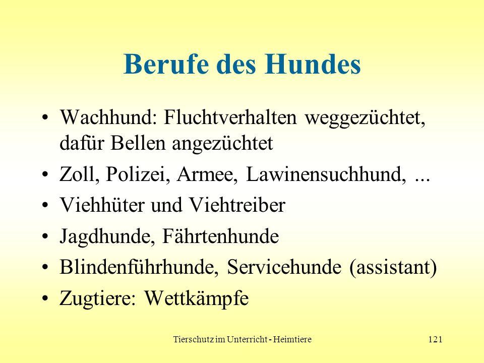 Tierschutz im Unterricht - Heimtiere121 Berufe des Hundes Wachhund: Fluchtverhalten weggezüchtet, dafür Bellen angezüchtet Zoll, Polizei, Armee, Lawin
