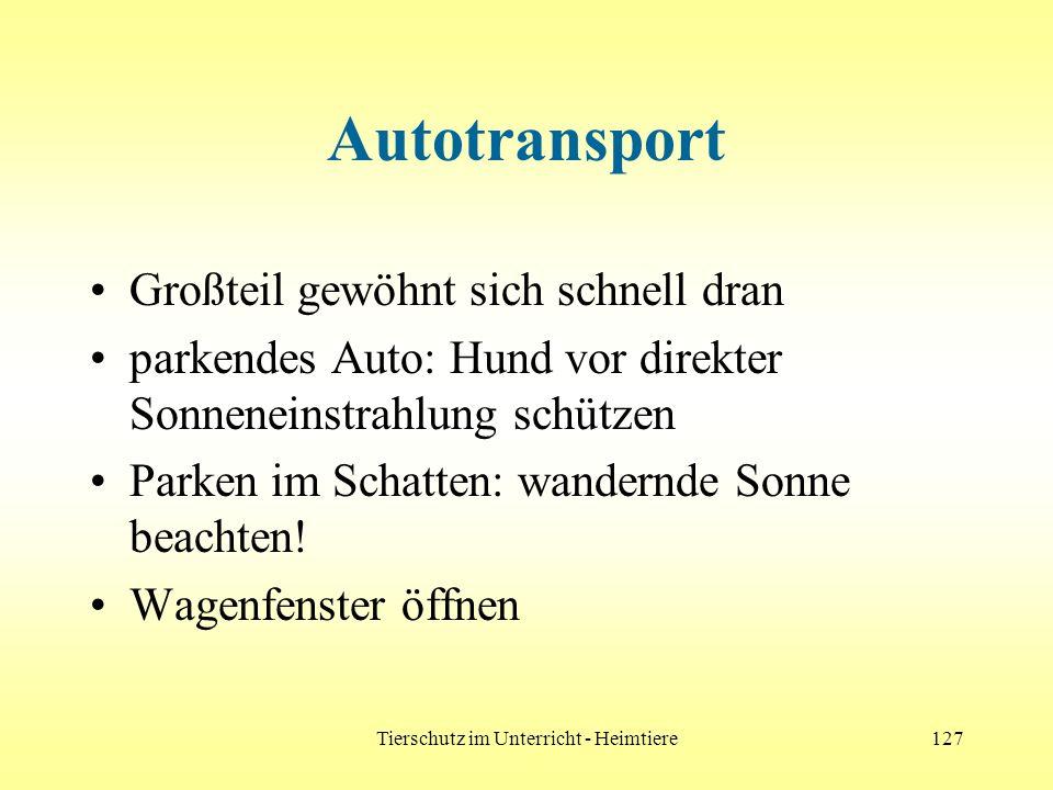 Tierschutz im Unterricht - Heimtiere127 Autotransport Großteil gewöhnt sich schnell dran parkendes Auto: Hund vor direkter Sonneneinstrahlung schützen