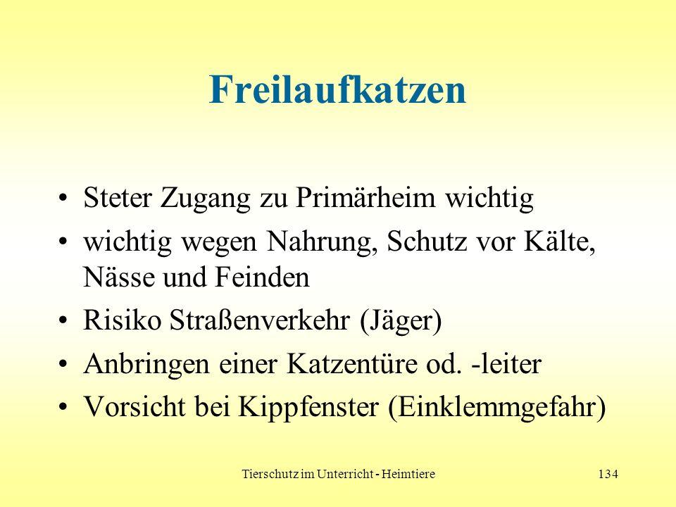 Tierschutz im Unterricht - Heimtiere134 Freilaufkatzen Steter Zugang zu Primärheim wichtig wichtig wegen Nahrung, Schutz vor Kälte, Nässe und Feinden