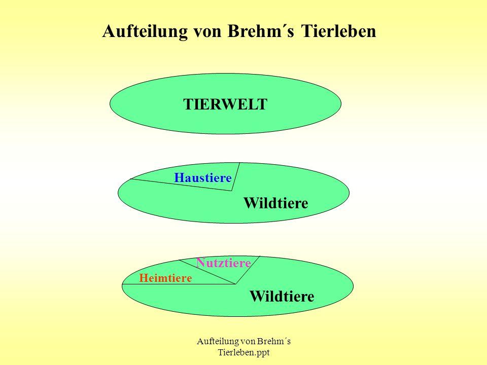 Aufteilung von Brehm´s Tierleben.ppt Aufteilung von Brehm´s Tierleben TIERWELT Wildtiere Wildtiere Haustiere Nutztiere Heimtiere