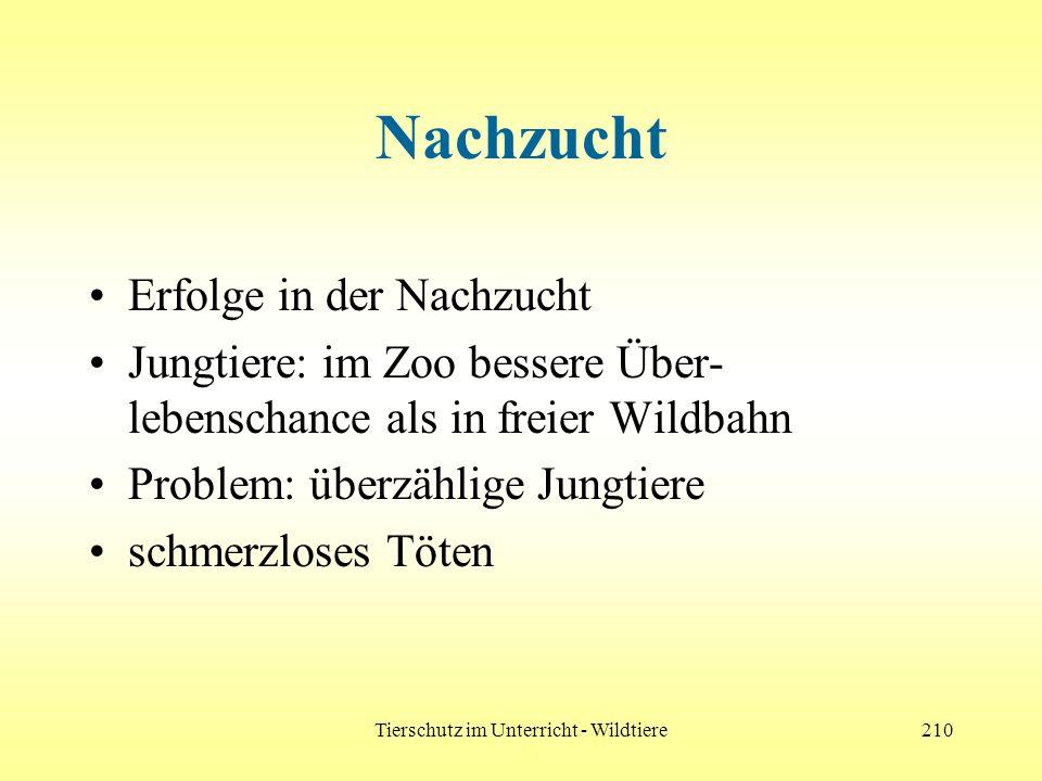 Tierschutz im Unterricht - Wildtiere210 Nachzucht Erfolge in der Nachzucht Jungtiere: im Zoo bessere Über- lebenschance als in freier Wildbahn Problem