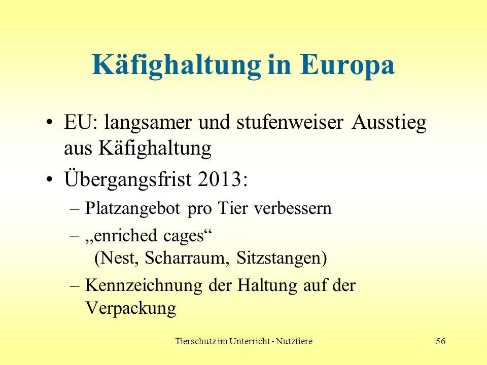 Tierschutz im Unterricht - Nutztiere56 Käfighaltung in Europa EU: langsamer und stufenweiser Ausstieg aus Käfighaltung Übergangsfrist 2013: –Platzange