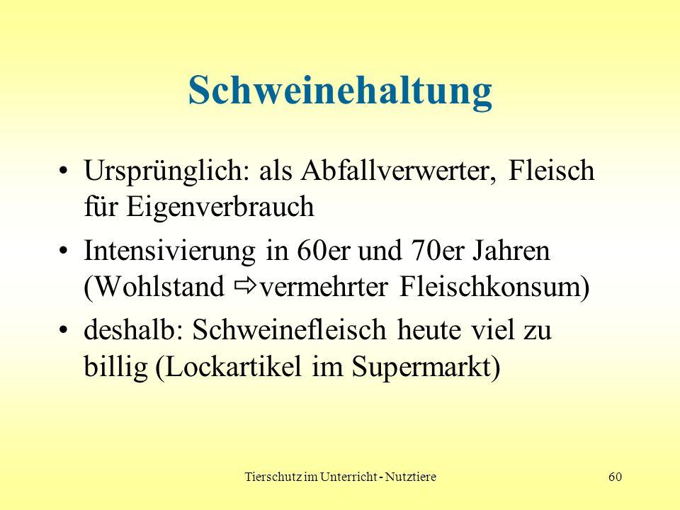 Tierschutz im Unterricht - Nutztiere60 Schweinehaltung Ursprünglich: als Abfallverwerter, Fleisch für Eigenverbrauch Intensivierung in 60er und 70er J