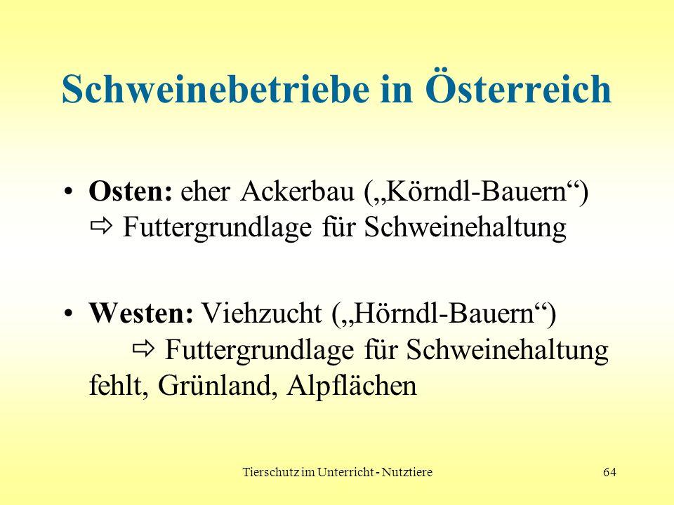 Tierschutz im Unterricht - Nutztiere64 Schweinebetriebe in Österreich Osten: eher Ackerbau (Körndl-Bauern) Futtergrundlage für Schweinehaltung Westen: